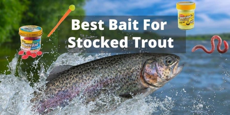 Best Bait For Stocked Trout