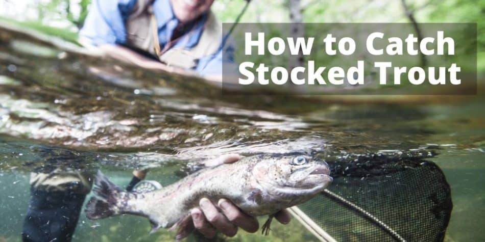How to Catch Stocked Trout