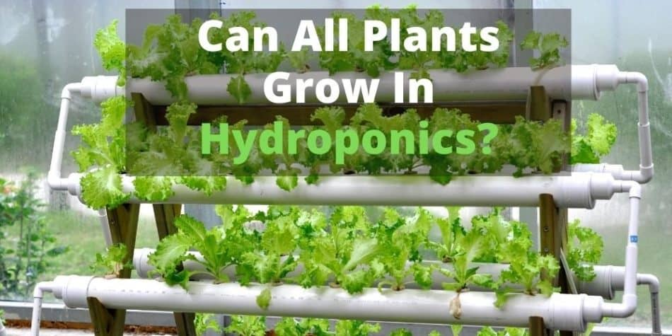Can All Plants Grow In Hydroponics
