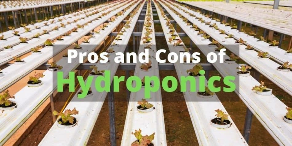 Pros and Cons of Hydroponics 2