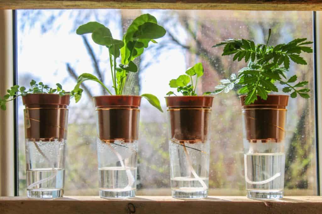 hydroponic wick system gardening