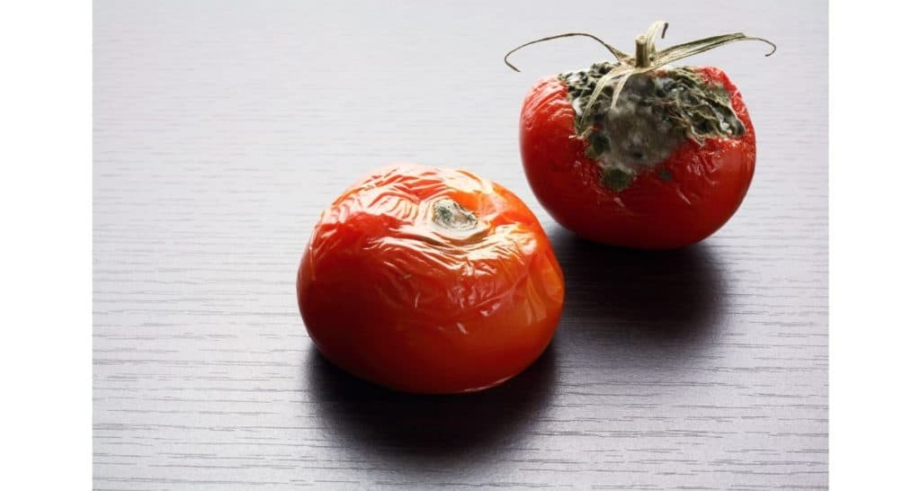 wrinkled and rotten tomatoes
