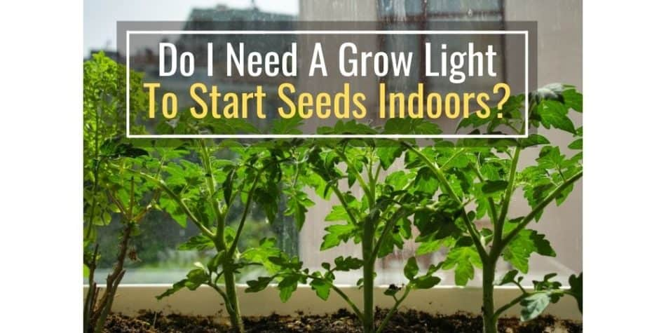Do I Need A Grow Light To Start Seeds Indoors