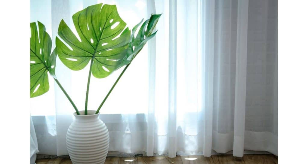 Sheer curtains for indoor house plants
