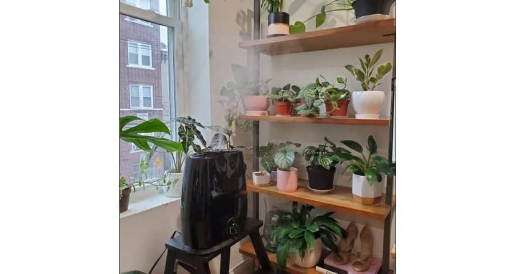 Humidifier For Indoor Plants